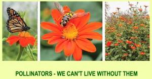 Bee+Flower